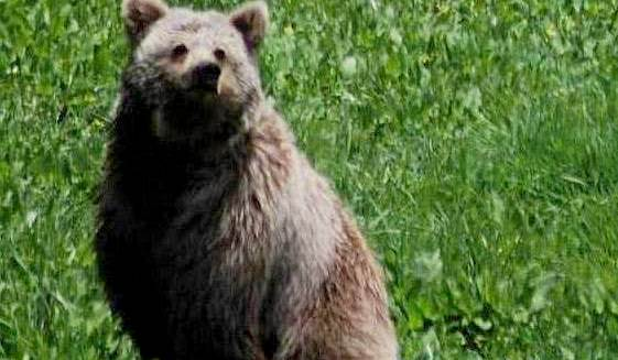 bear seen at kugti wildlife sanctuary bharmour